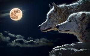 wolf-547203_960_720